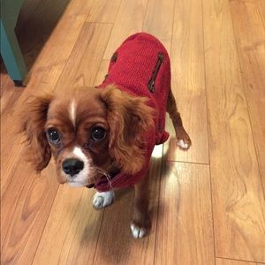 Canada Pooch Dog Sweater